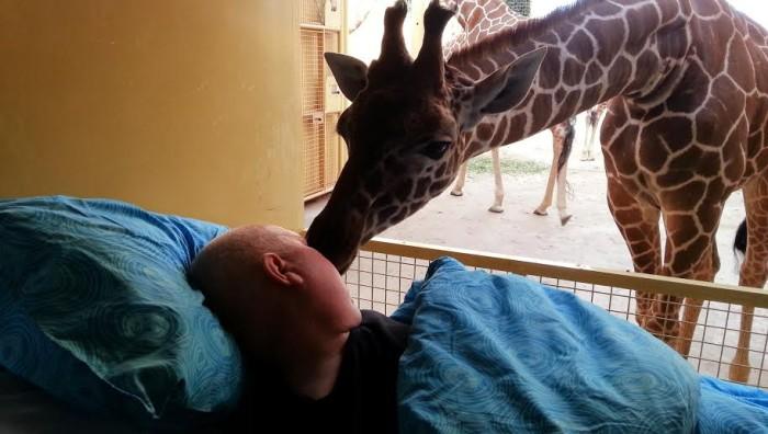 Giraffe Goodbye
