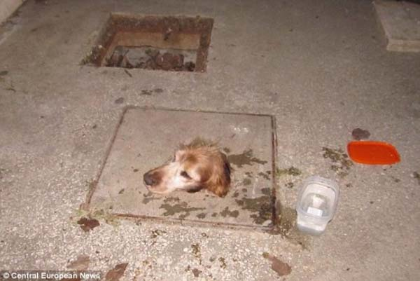 dogsewer